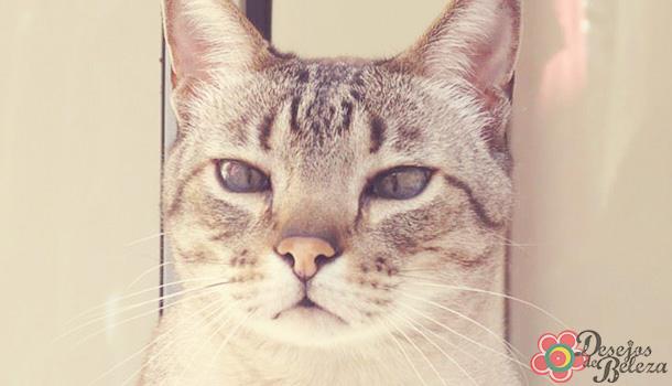gatos-idosos-cuidados-especiais-2