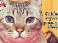 Cuidados especiais para gatos idosos