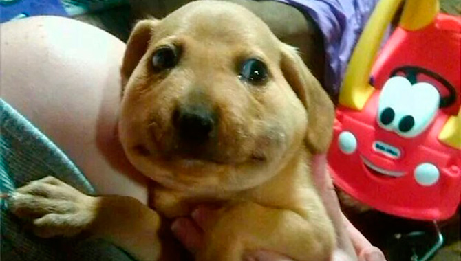 cachorro-e-abelhas