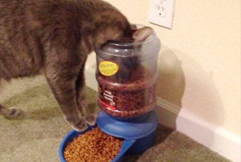 cuidar-de-gatos-5