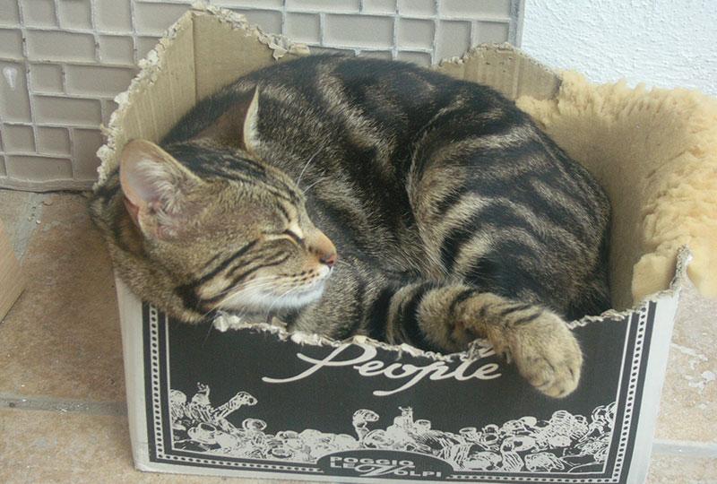 gatos-e-caixas