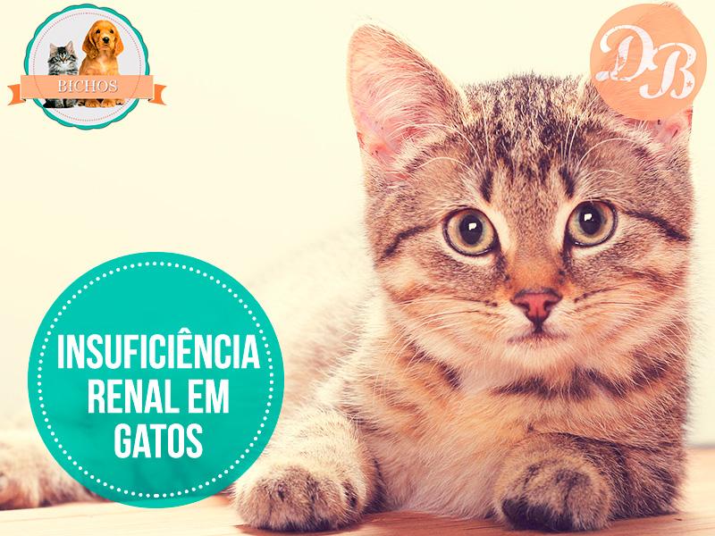 insuficiência-renal-em-gatos-capa