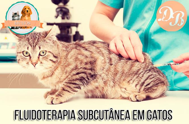 fluidoterapia-em-gatos